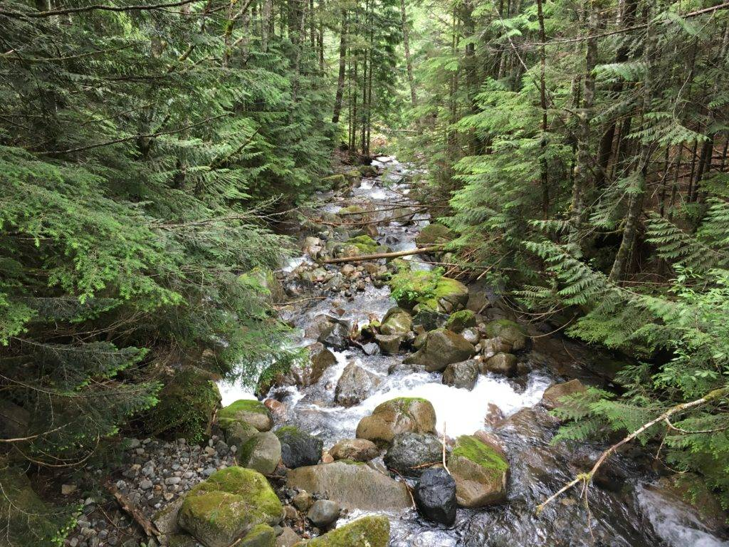 Humpback Creek near the start of the Annette Lake trail.